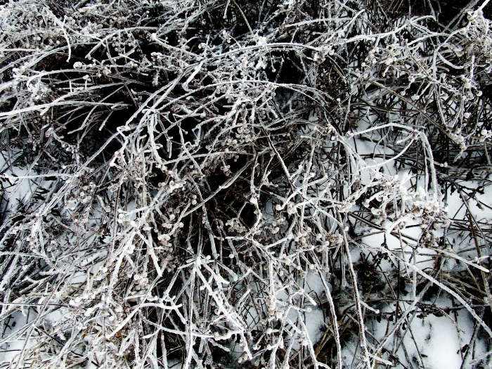 meadow after the ice storm
