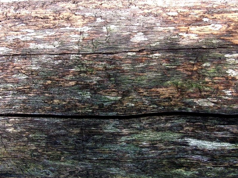 colors of decay in a red oak log