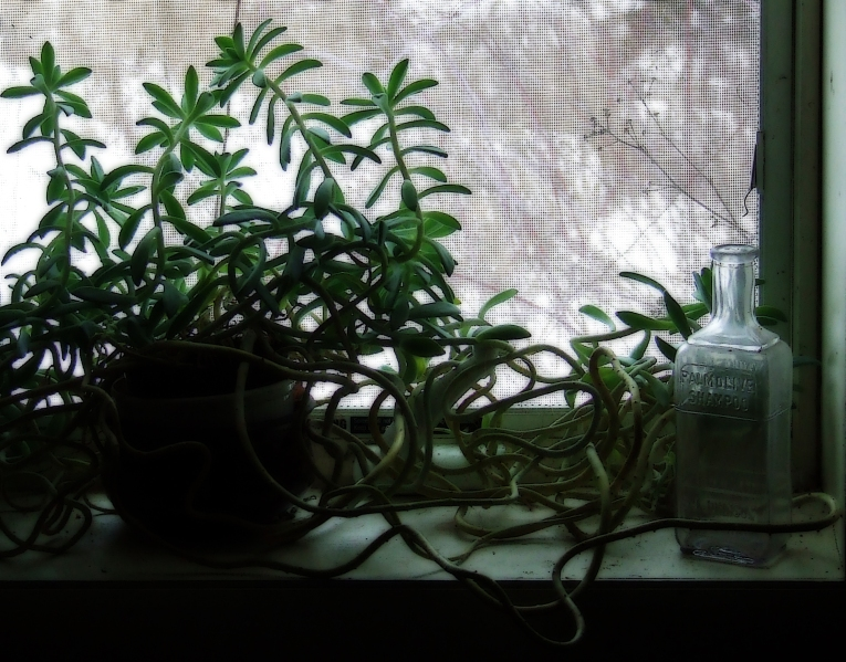 Still life with houseplant, an old Palmolive shampoo bottle, and a view of winter weeds
