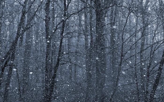 snowy trees 4