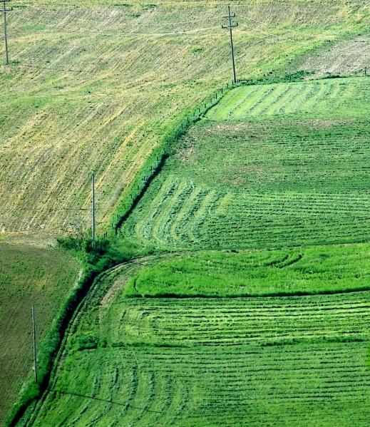 hayfields in spring