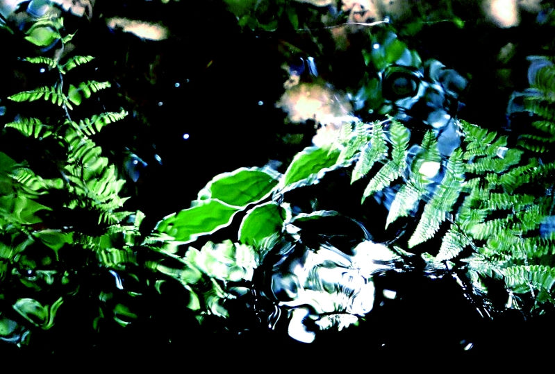 fern reflections in stream