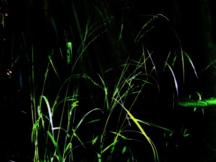 woodland grass