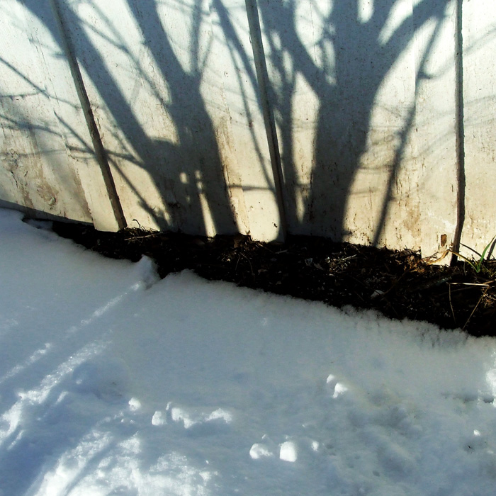 spicebush shadows