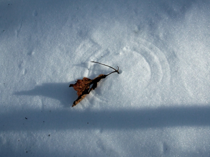 circle in snow drawn by the wind with a leaf caught by its stem