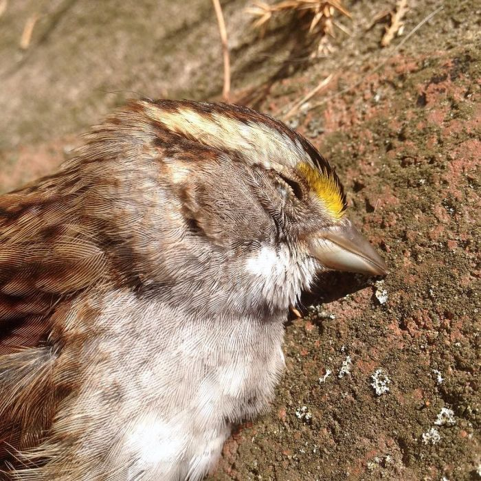 Close-up a dead sparrow on the concrete.