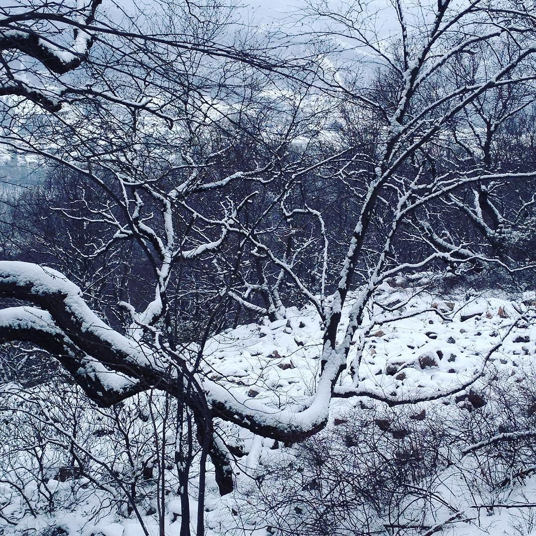 Long limbs of trees reach out into a snow-covered boulder field or block slope on top of a mountain.