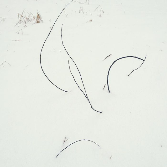 Sticks arching up out of the snow.