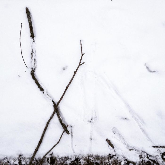 Sticks in the snow beside the tracks they made when blown about by the wind.