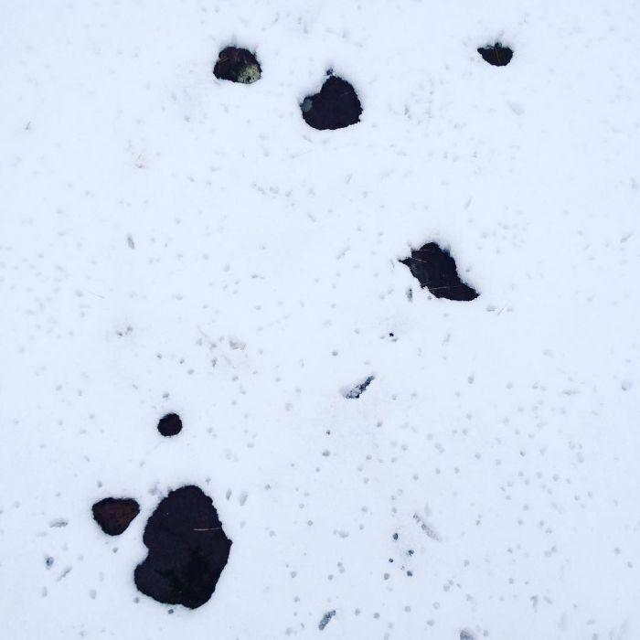 View of the ground with a scattering of rocks that have melted through the snow.