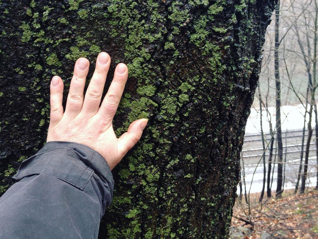 A hand resting on an enormous, lichen-covered tree above the railroad tracks.