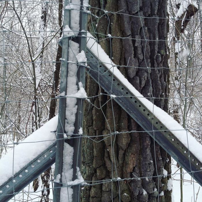 Metal fence posts with fresh snow on them at a corner of a tall fence, with a large black gum tree right on the other side.