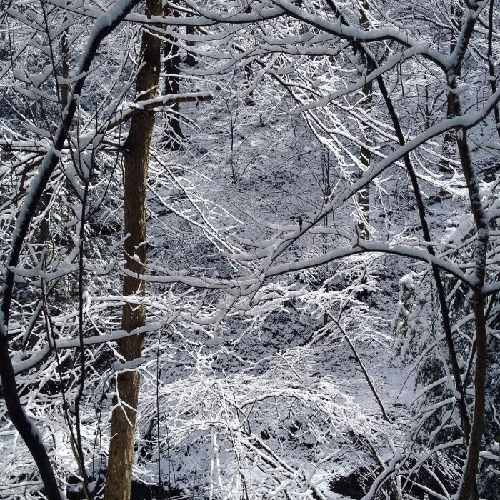 View of a snow-covered forest with just a few white branches illuminated by the sun.