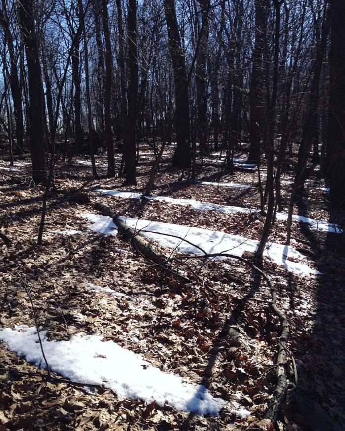 Stripes of snow on an otherwise brown forest floor, with blue sky behind the trees.