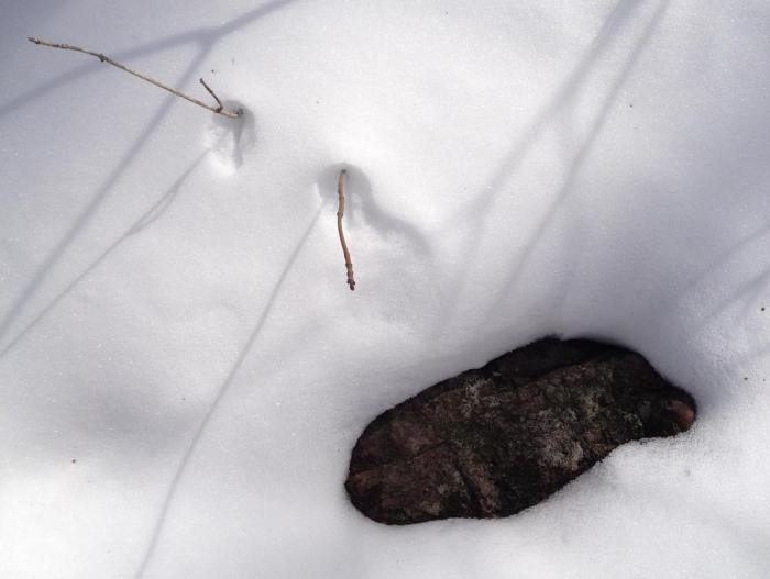 Shadows on snow with a close-up of a rock and two sticks.