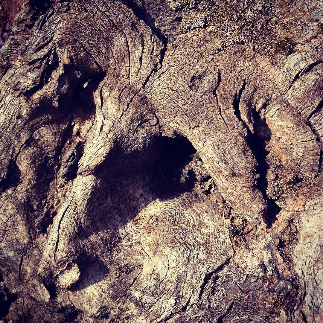Close-up of the swirling grain in an old stump.