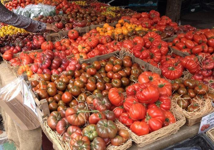 A large table covered with different varieties of heirloom tomatoes.
