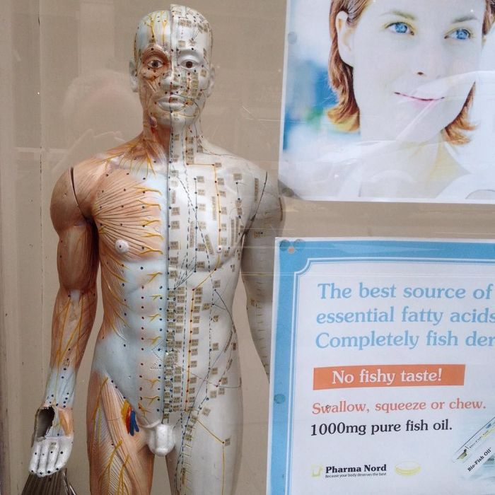 Plastic model of an idealized human body showing lines of qi and acupressure points