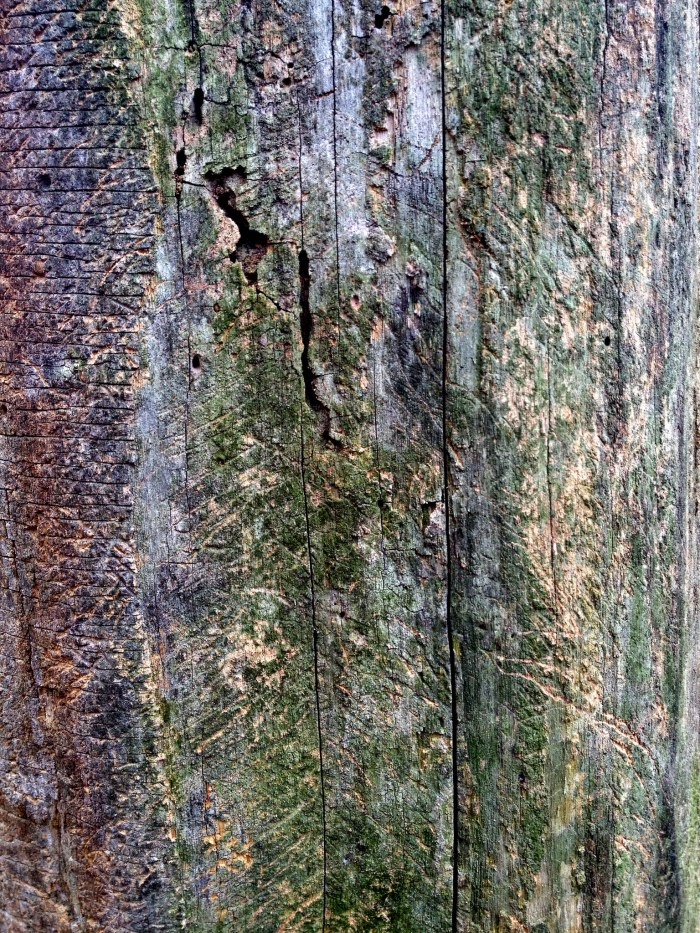 close-up of a dead tree with various scratch marks on it
