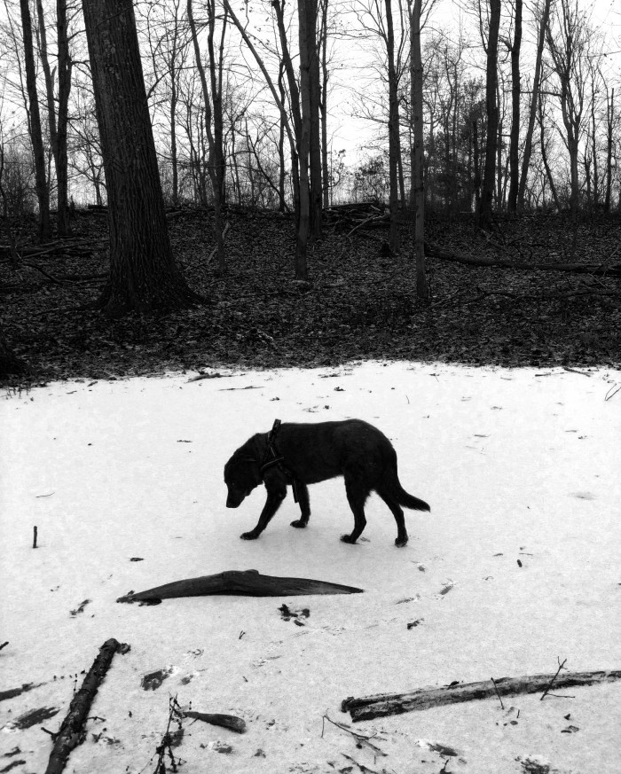 dog standing on a frozen pond in the woods