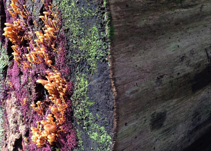 end of a log covered with brightly covered fungi
