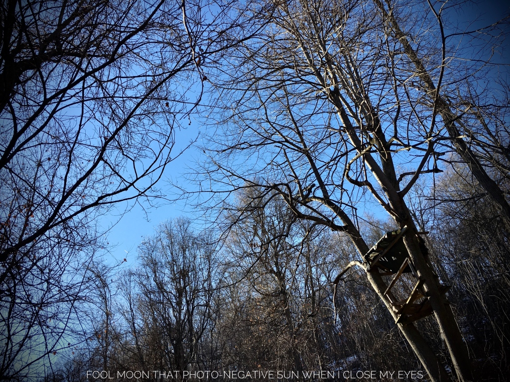 view of the clear blue sky with a ramshackle hunting platform high in a tree